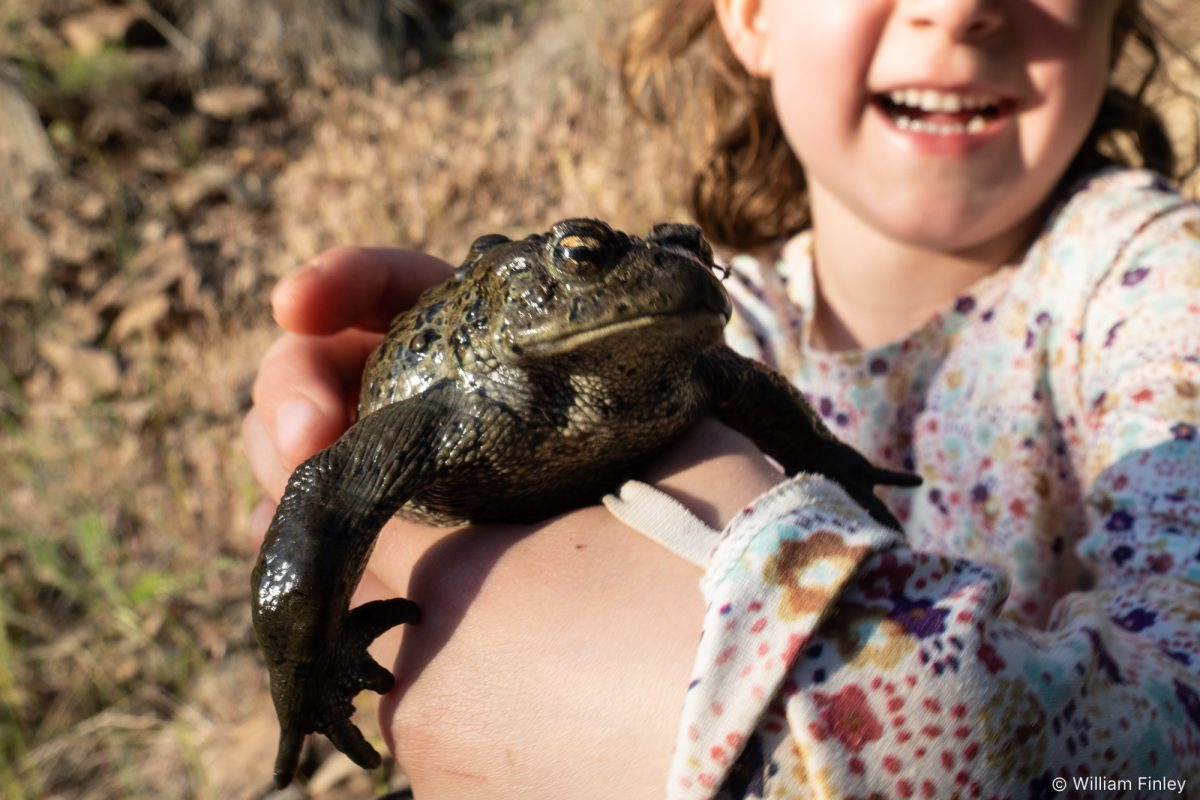 Western Toad (and happy kid)!