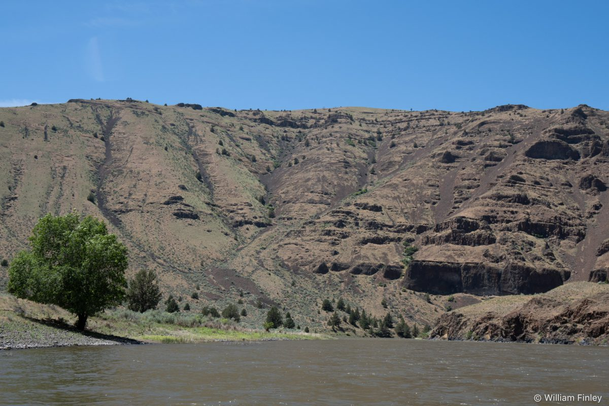 Typical scenery on the lower river.